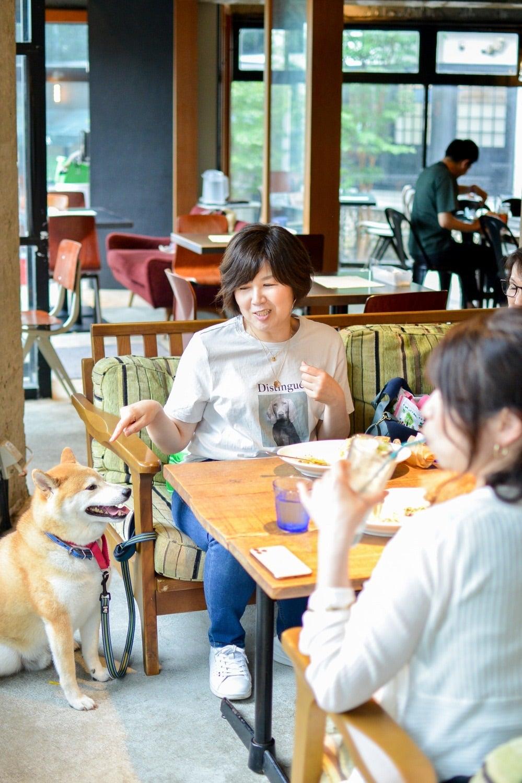 わんこのお茶会って犬がいなくても参加できますか?の記事より