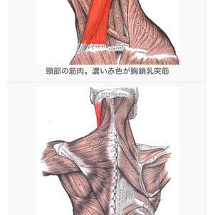 顎関節と肩甲骨周りと胸鎖乳突筋の画像