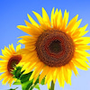 8月☆夏の始まり!〜あなたの望む世界の始まり〜の画像