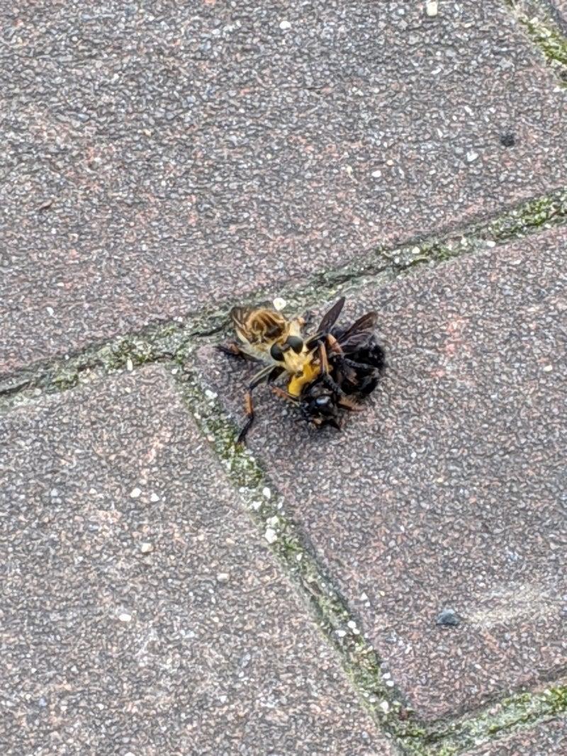 は 取ら ず と 虻 蜂
