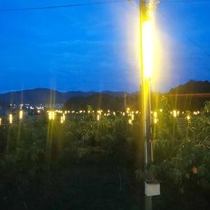 赤磐市防蛾灯の画像