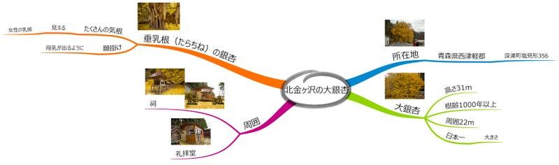 北金ヶ沢の大銀杏19  m