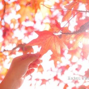 秋のロケーションフォトをお考えの妊婦さんやママへの画像