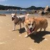 犬専用ドッグビーチへ♥マンドゥ最初で最後の海