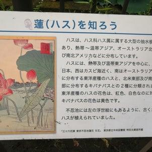 上野の不忍池すいれん!の画像