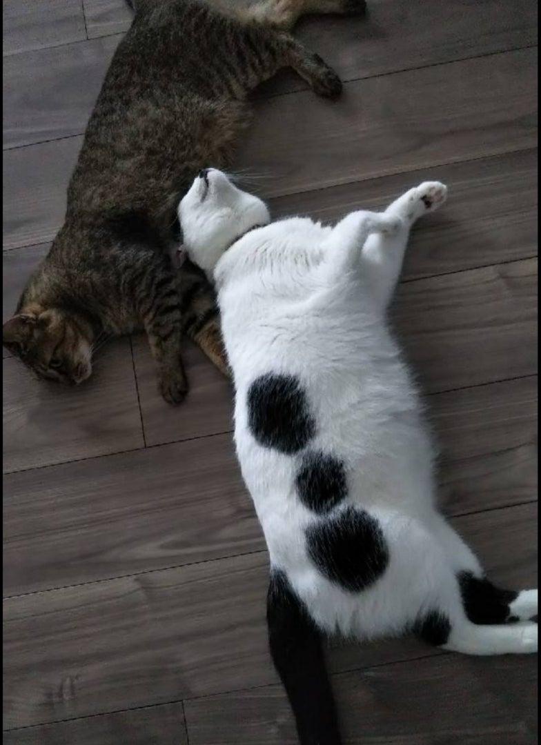 9秒で3kg痩せる猫のびダイエットの効果的な ...