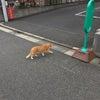 2020年8月8日 世界猫の日の画像