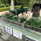 2020/08/08 「鶴見産野菜」や「湘南野菜」をキリンビールで直売してました! の記事より