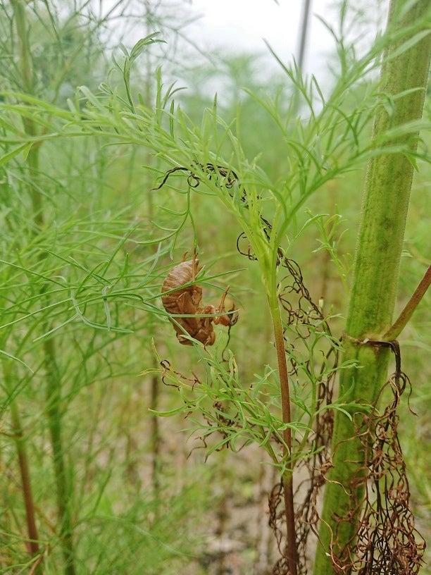 蝉の抜け殻が。