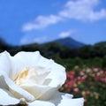 京都ちゅーすけのブログ