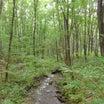 山荘:緑の森のお散歩・ランチは[オムライス]・・♪