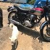 犬たちと愛車W650