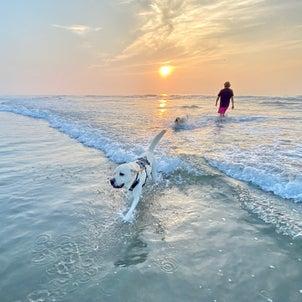 8月の海活①の画像