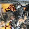 譲渡会のご報告&子猫4匹保護