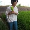 農labo、援農ボランティアの画像