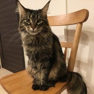"""""""猫さんってかわいい""""の画像"""