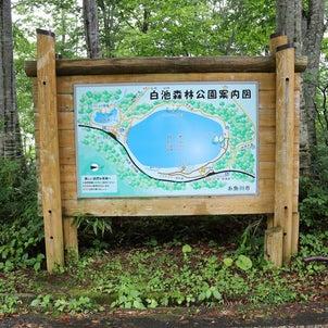糸魚川の避暑地、蓮華白池に行ってきました。の画像