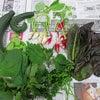 【介護付きホーム フローレンスケアたまプラーザ】 収穫♪の画像