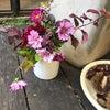 秋の花束をつくるレッスンの画像