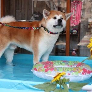 プール開きしました☆の画像