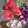 南の国の花~はないく2年生&1年生の画像