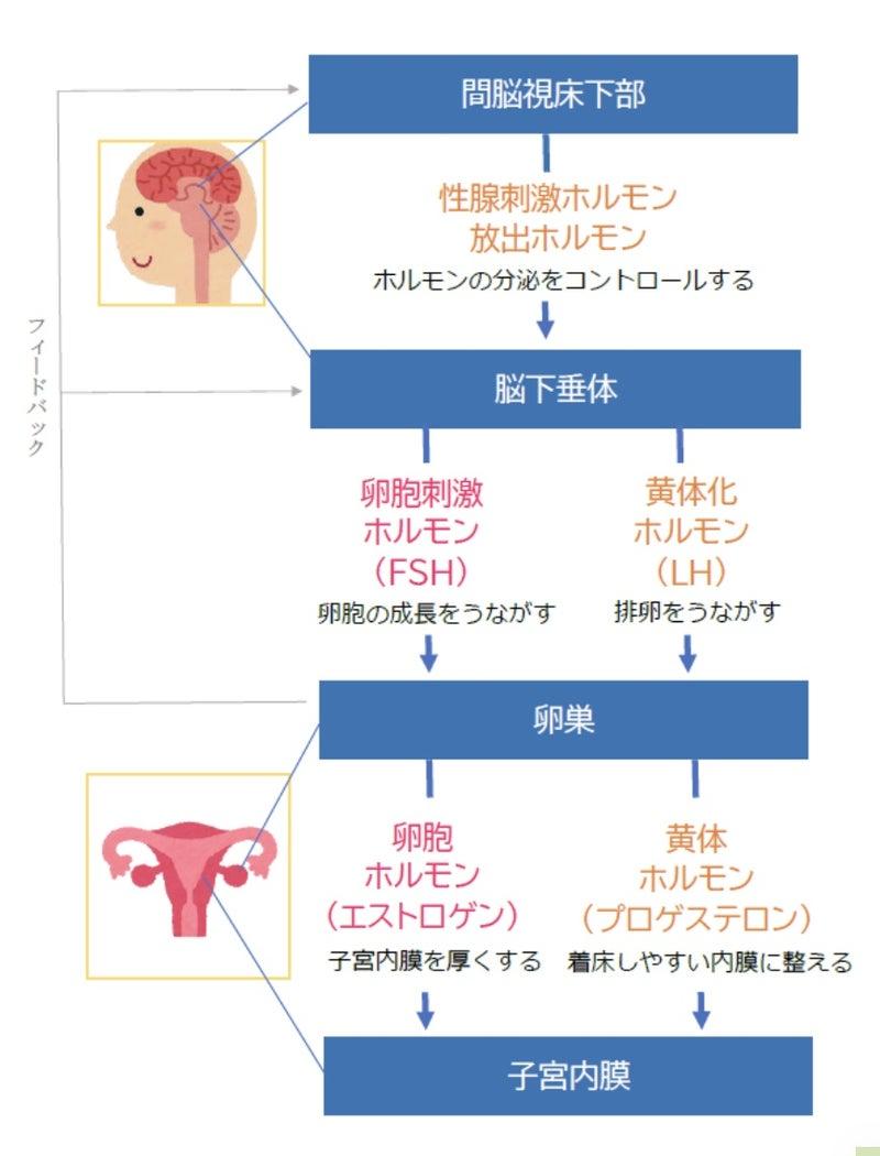 やすい し 計算 日 妊娠 排卵 日