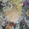 お花タンの定期便の画像