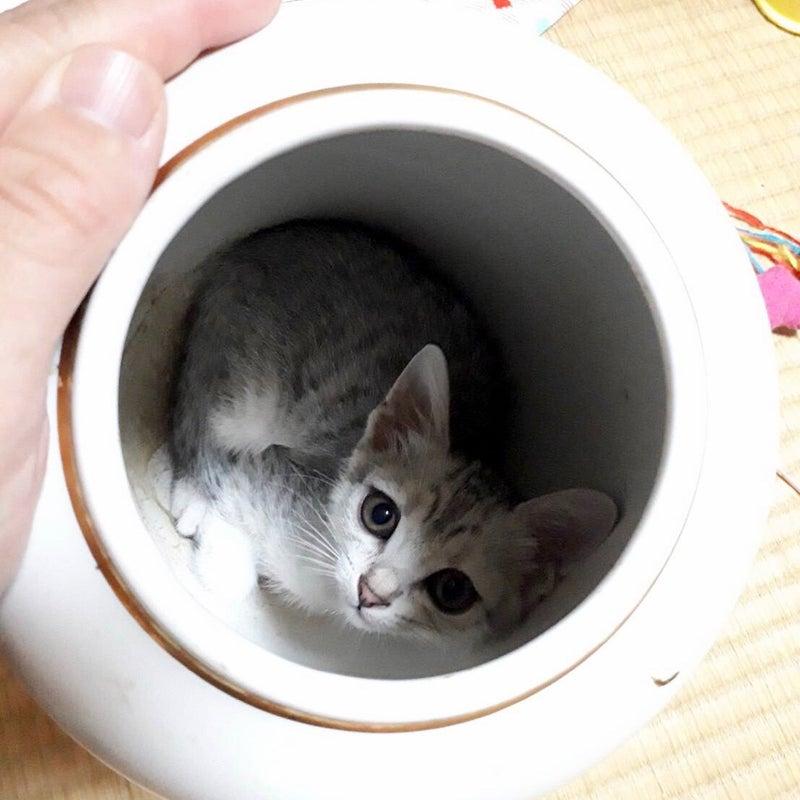 猫 団子 ホウ 酸 猫が来なくなる方法とは?庭の猫よけ・糞尿被害対策 [猫]