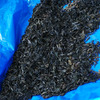 藍の葉むしりの画像