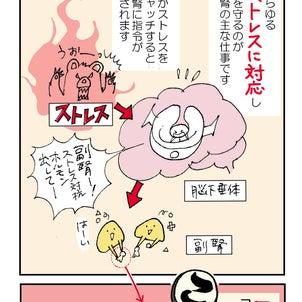 【反射区かるた】副腎(2)ストレス対抗ホルモン!の画像