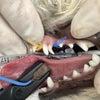 犬の乳歯(乳歯、残っていませんか?)の画像