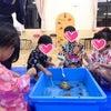 ぶじょうこども園さまにてあそべる移動水族館開催!の画像