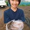 援農ボランティアの画像