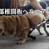 【ドキュメンタリー】わんワーク チャンネル開設 第一弾(ボランティア撮影編集)の画像