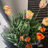 春が来たの画像
