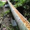 竹式傾斜土槽による排水浄化実験の画像