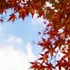 夏だけじゃない!秋こそ紫外線対策を!の画像