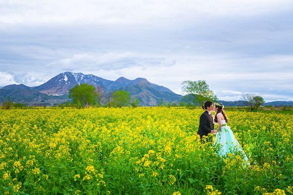 菜の花畑でキスをする新郎新婦