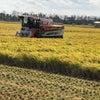 稲刈り始めの画像