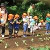 野菜の苗植えの画像