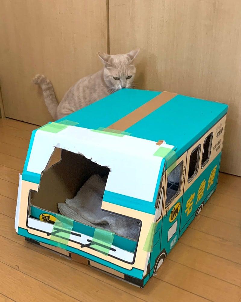 耳 ヤマト 猫 ボックス
