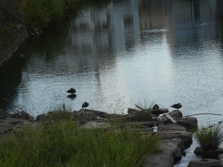 すっきり、シンプルに  ねことわたしといろいろと・・・夕方の川