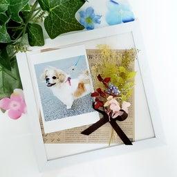 画像 ◻️岡山トヨペット   お花のフレーム の記事より 2つ目