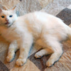 9/20(日) にゃんクルー譲渡会に参加の猫さんたち その1の画像