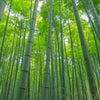 竹を使って森を守ろうの画像