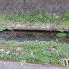 野川の源流の画像