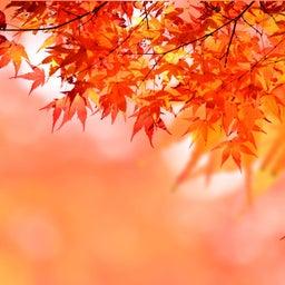 画像 10月のスケジュール♡ の記事より 1つ目