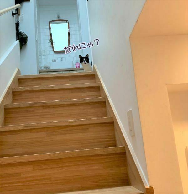白黒猫おまめさんが階段上から見下ろしている画像