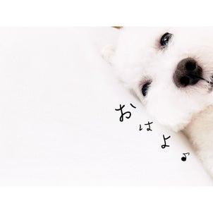 在宅勤務中の看板犬の一日の画像