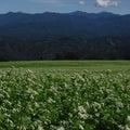 素朴!!俳優「峰竜太」氏の故郷の畑に広がる大景観「南アルプスと白い絨毯」